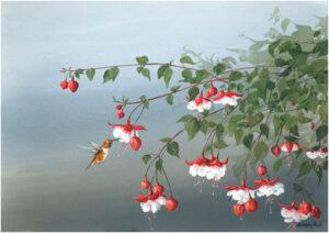 GICLEE-FD-Fuchsia-Blossoms